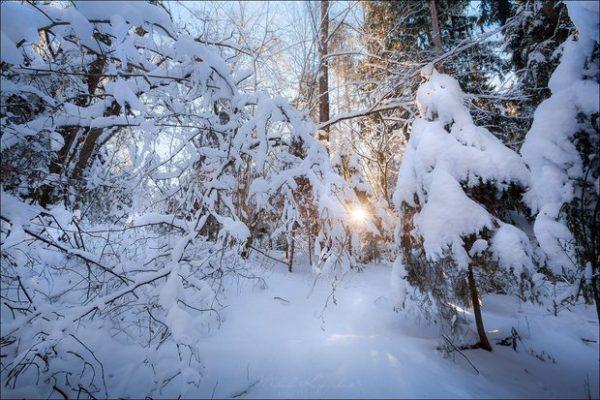В Могилеве активисты создали группу для сохранения Печерского лесопарка